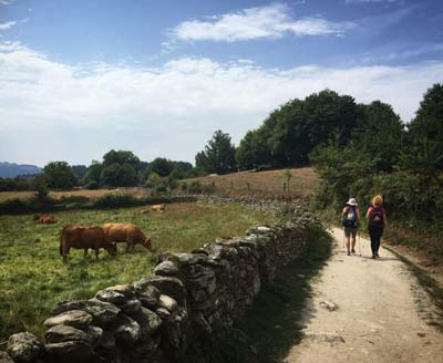 Two pilgrims on the Camino de Santiago with cows in the background